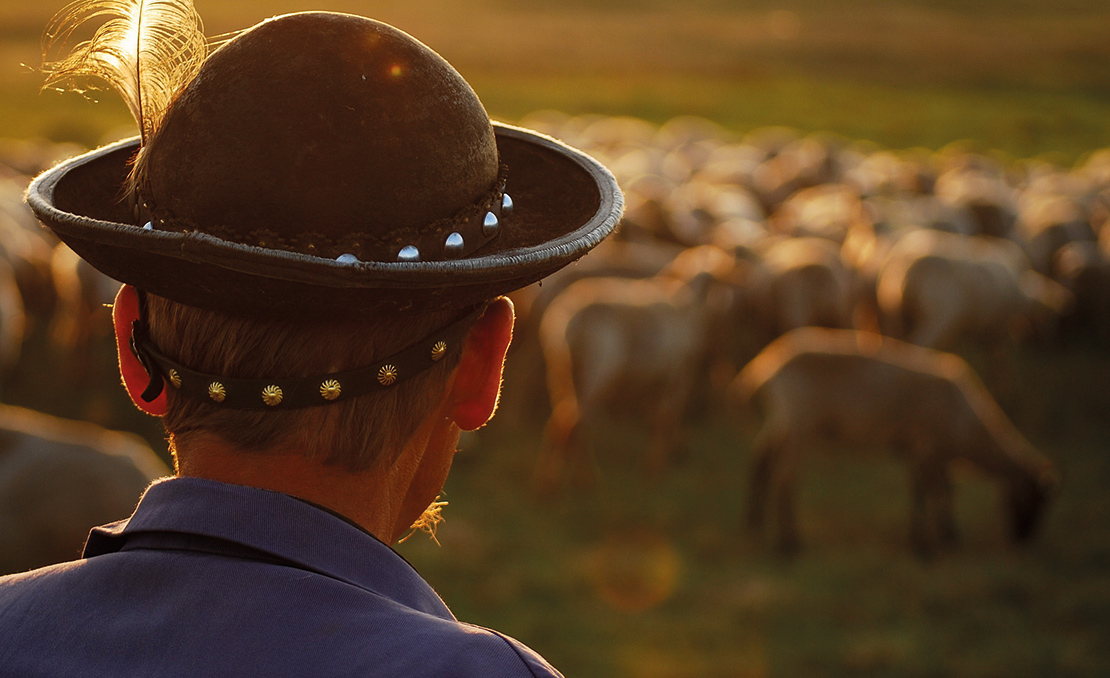A herder watches over his flock. Credit: Abel Peter.