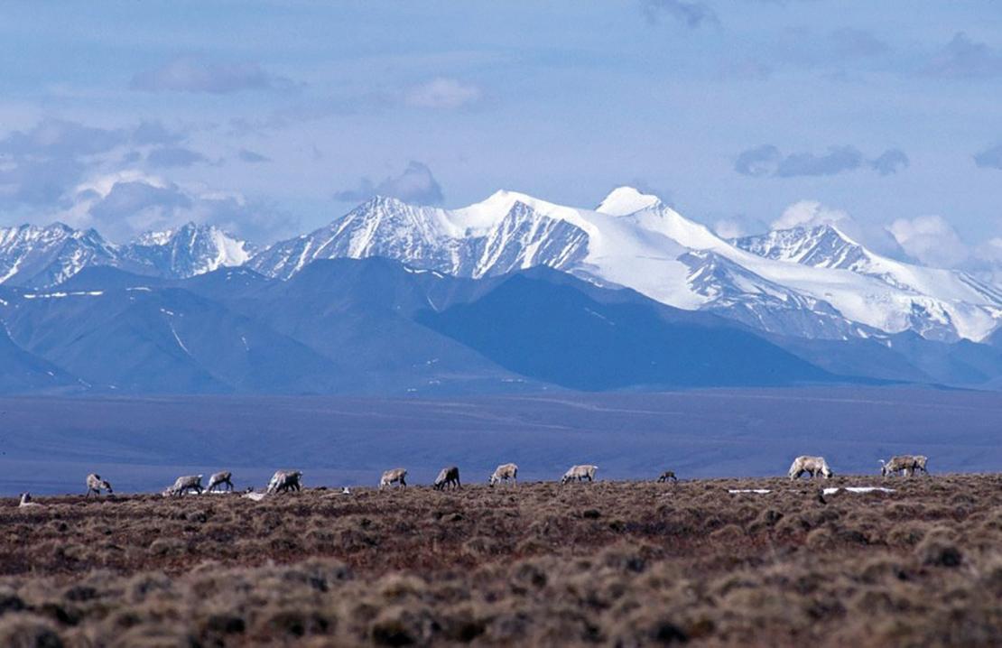 The Arctic landscape. Credit: US Fish & Wildlife Service.