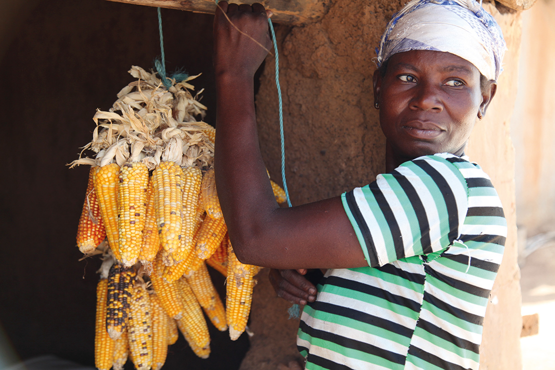 A member of the Rural Women's Farmers Association of Ghana RUWFAG hanging corn to preserve the seeds for sowing. Credit Global Justice Now.
