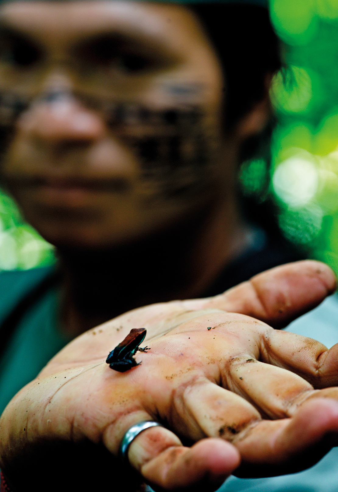 A man holds up a small species of frog, an example of the biodiversity of the Ecuadorian rainforest. Credit: James Morgan.