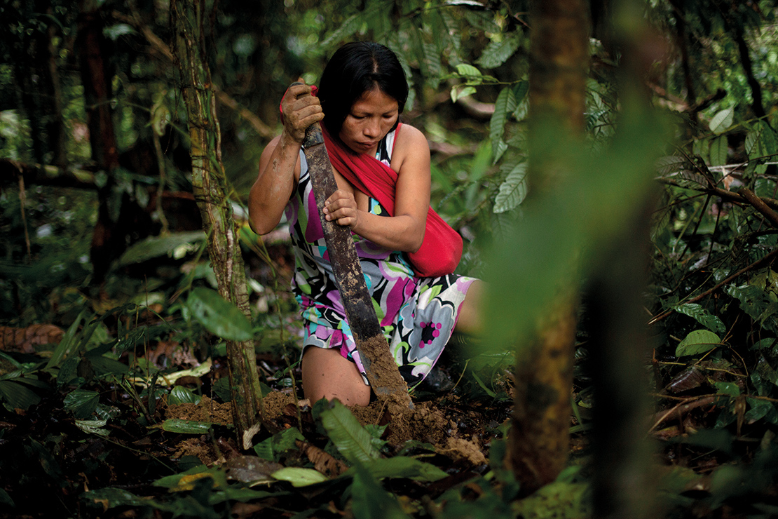 A Waorani woman digs the earth with a machete in order to plant plantain saplings in a patch of ground cleared in the Ecuadorian rainforest. Credit: Karla Gachet.