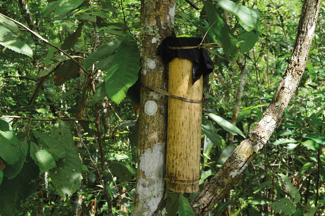 A bamboo box with the umbilical cord of a newborn is tied to a tree in a community forest near a village in Thailand. The tree takes care of the newborn, and no one can cut the tree down; the child becomes responsible for the welfare of the tree. Credit: Lakpa Nuri.