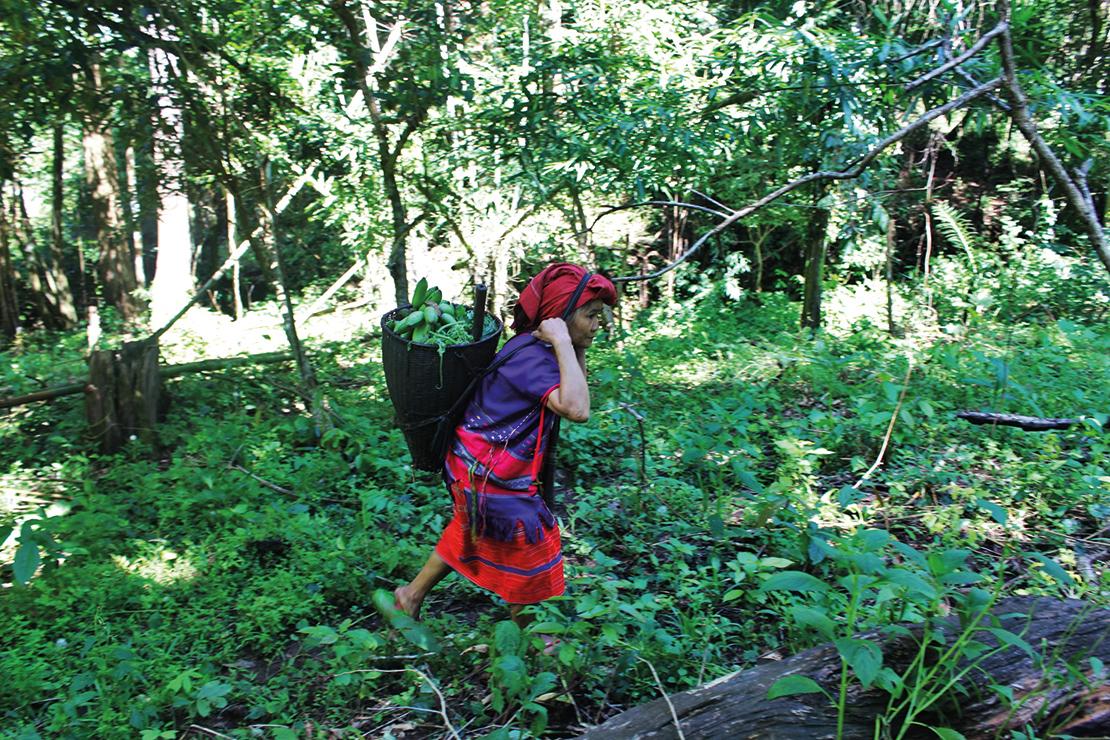 A woman gathers plants near Mae Hong Son village. Credit: V-Victory.