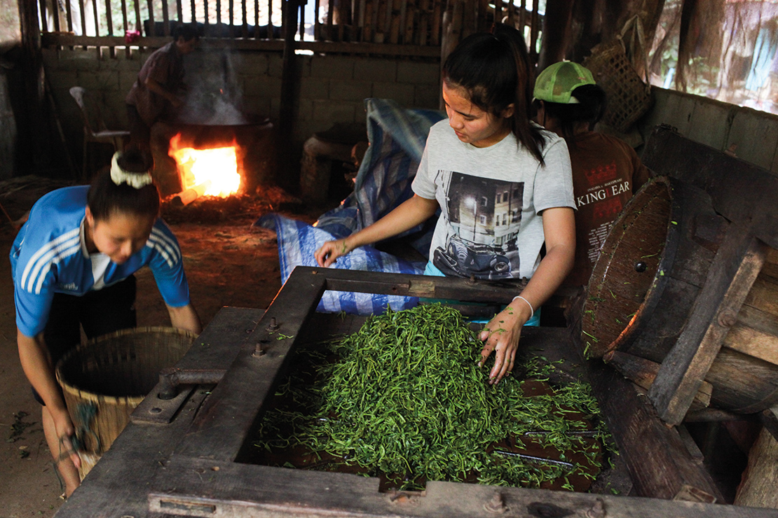 Young Karen women dry tea leaves. Credit: Visarut Sankham.